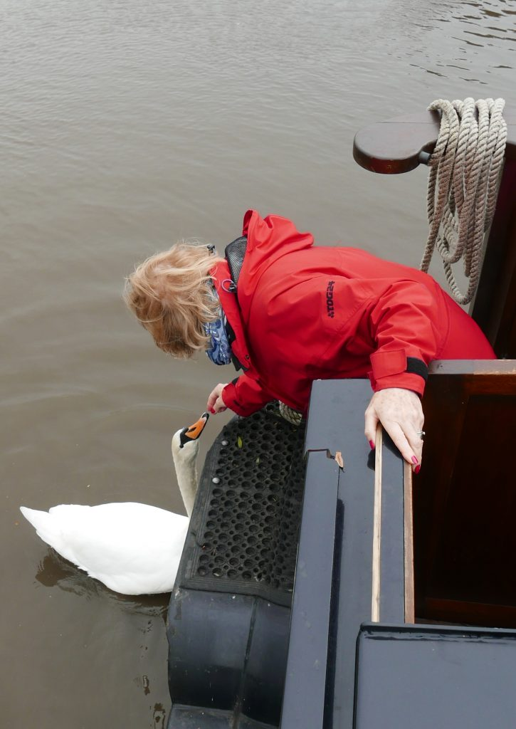 Feeding Swans from Lady Teal