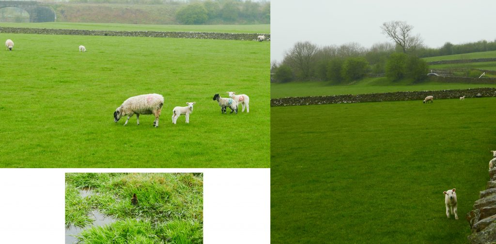 Montage of Young Dales