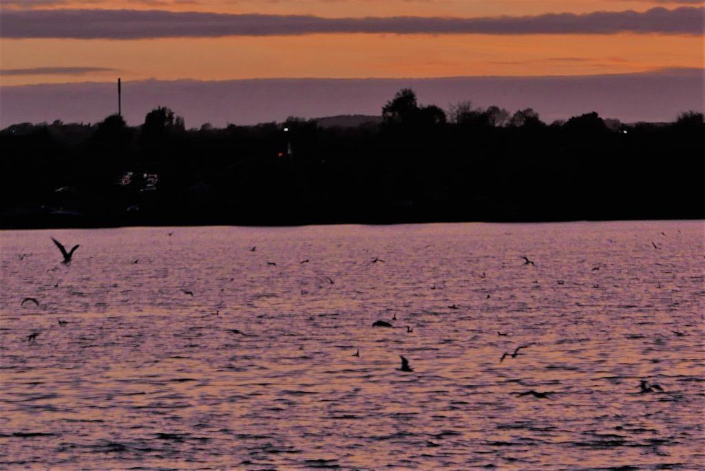 Gulls over Scotsmans flash Wigan