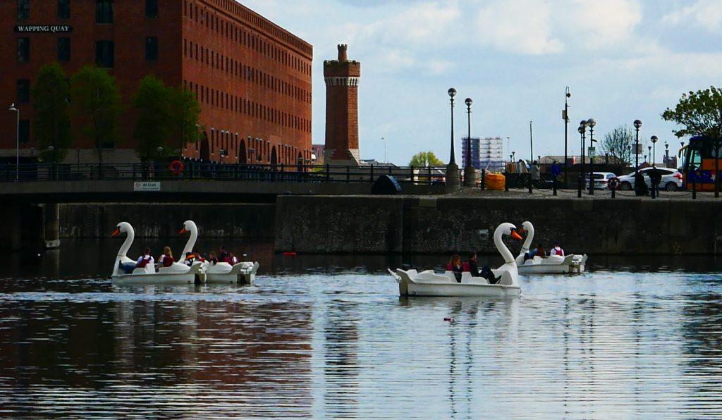 liverpool swans Salthouse dock